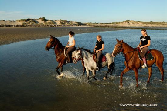 Promenade à cheval Berck-sur-mer